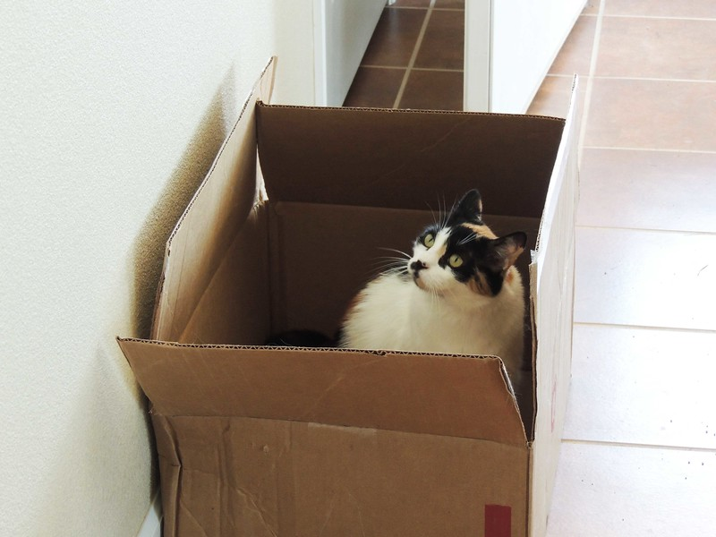 CAT TRAP IN ACTION