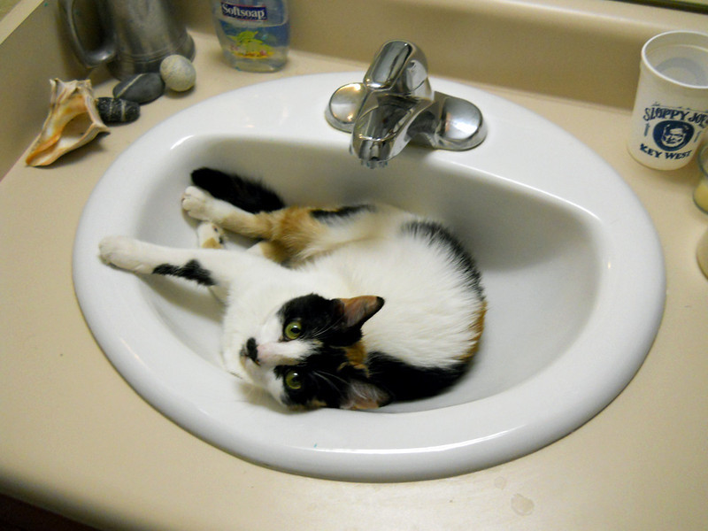 THE SINKABLE MOLLY