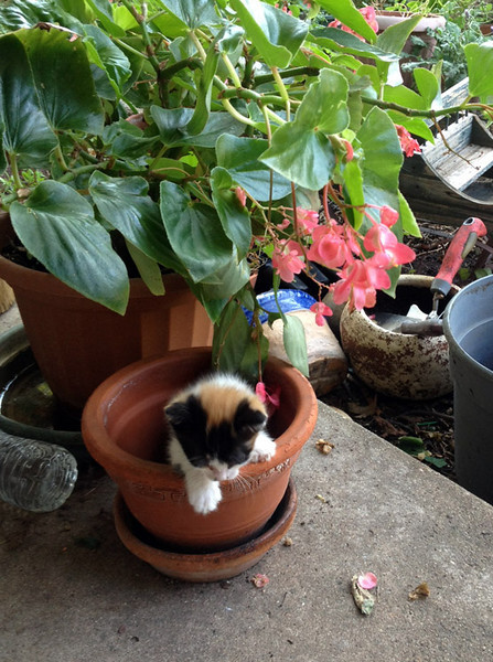 MOLLY IN THE FLOWER POT -- CUTE LITTLE BUGGER