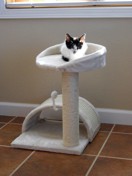 THE NEW CAT TREE IS HERE