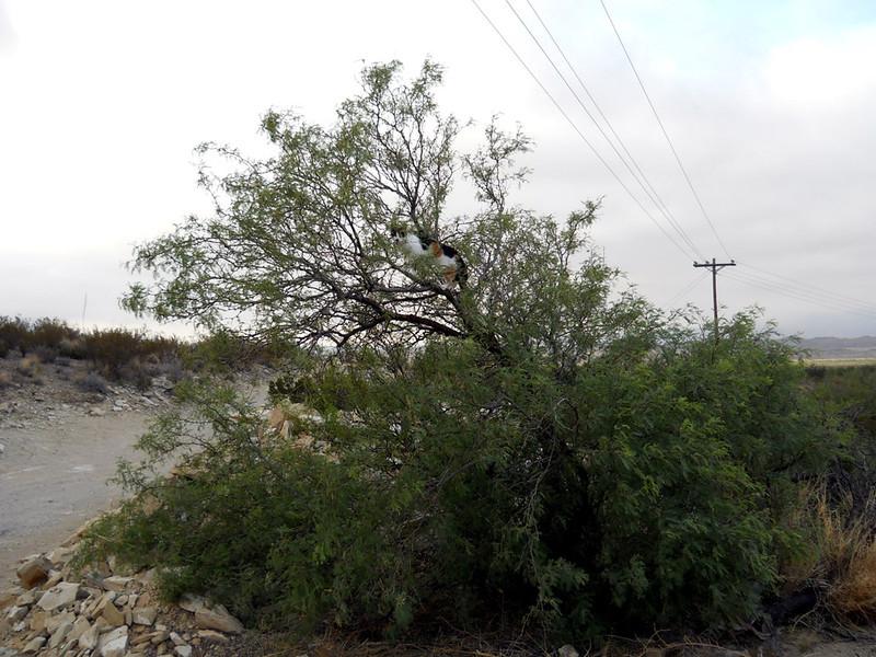 MOLLY UP A TREE -- AGAIN