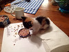 TINY CALICO DINES INDOORS, TOO