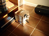 MORNING PLAYTIME (BOXES RULE!)