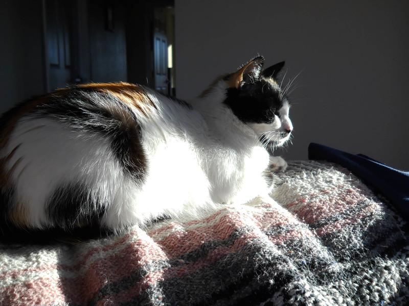 MOLLY IN THE SUN
