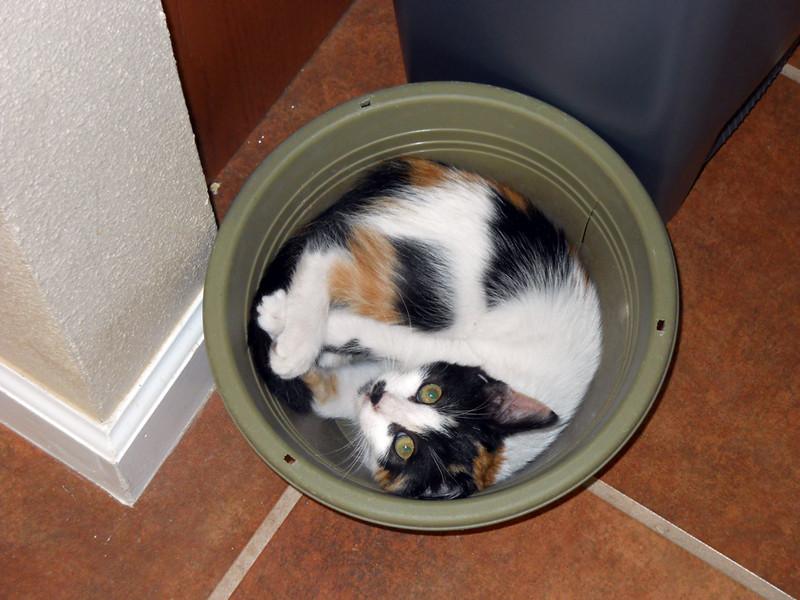 CAT-IN-THE-POT