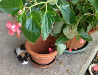 MOLLY IN THE PLANTS