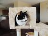NEW CAT CONDO