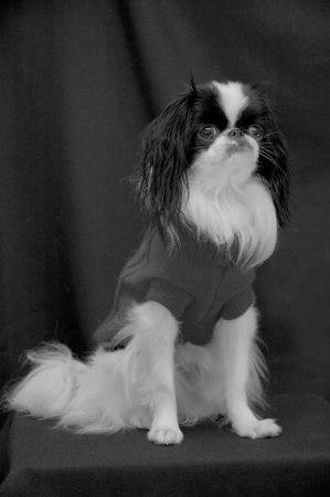 Brady in Black & White