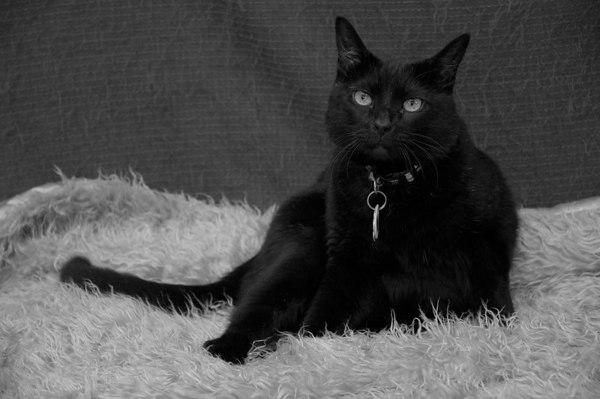Hootie in Black & White