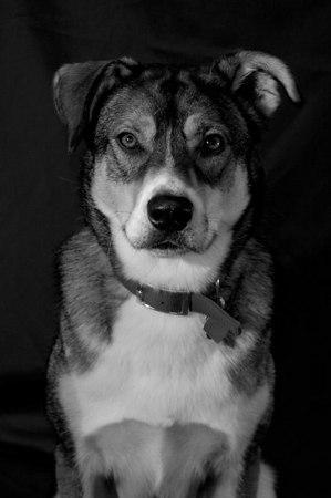 Sam in Black & White