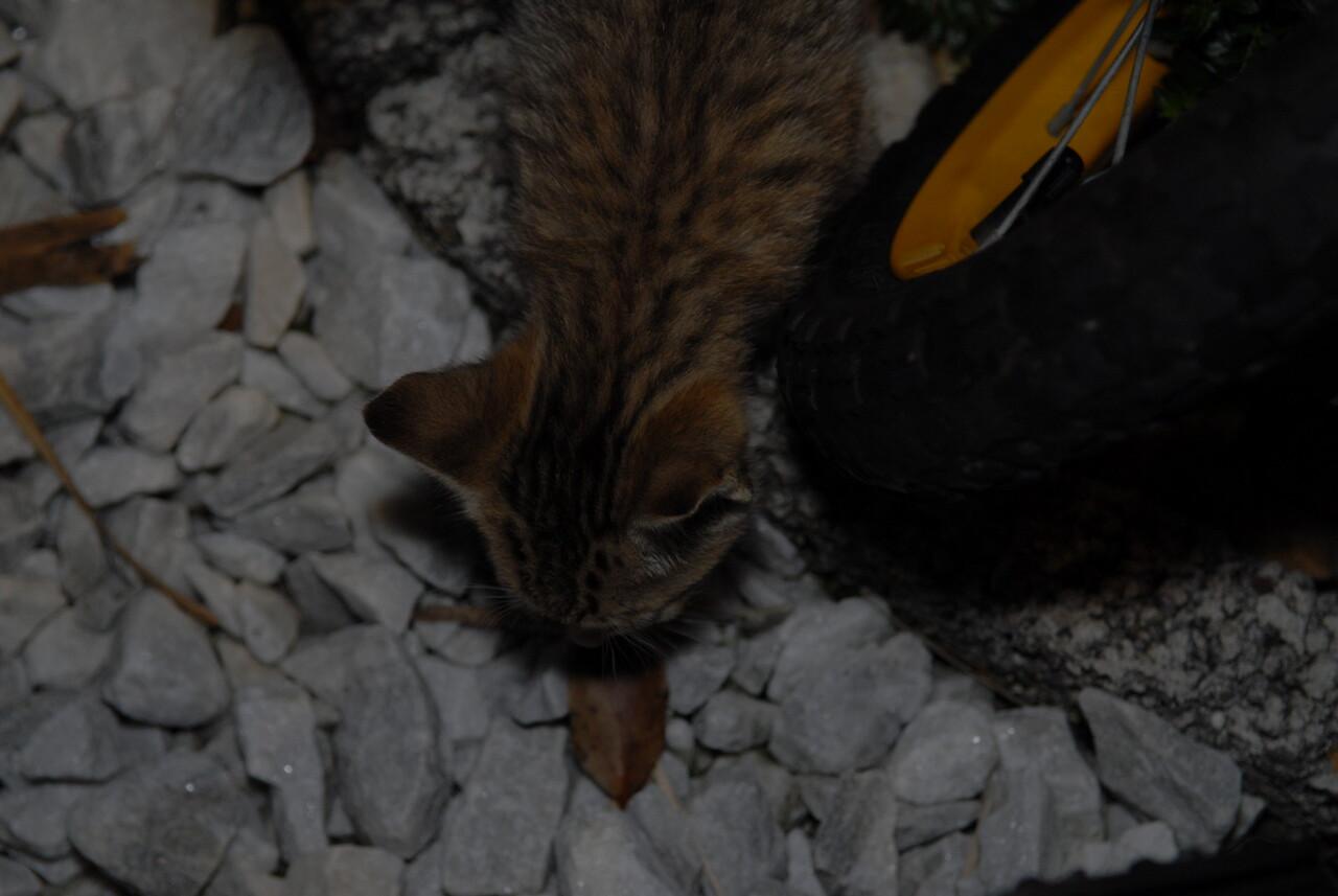 2007 04 12 - New Kitty 004
