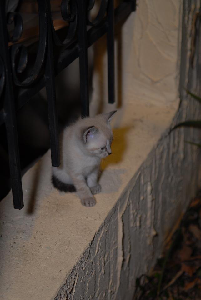 2007 04 12 - New Kitty 040
