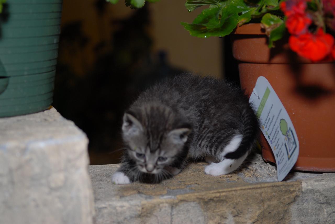2007 04 12 - New Kitty 030