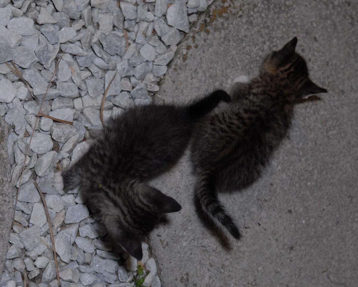 2007 04 12 - New Kitty 043