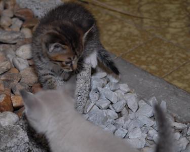 2007 04 12 - New Kitty 025