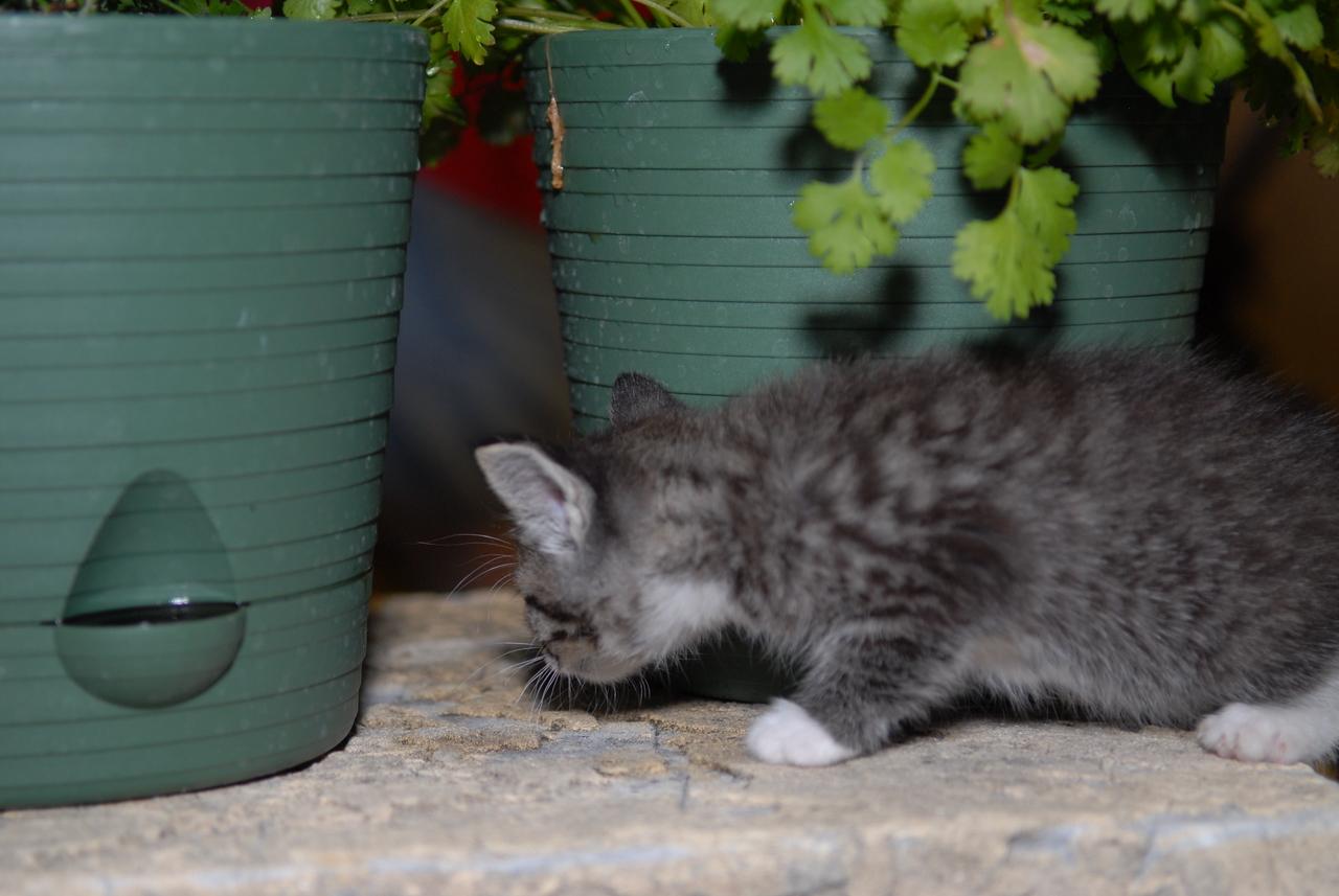 2007 04 12 - New Kitty 034