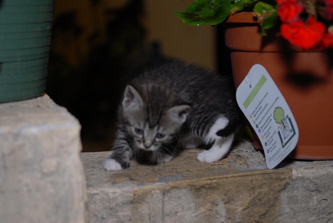 2007 04 12 - New Kitty 031