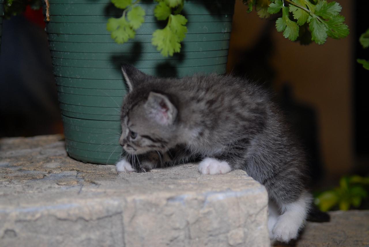 2007 04 12 - New Kitty 032