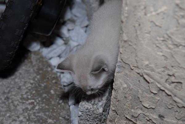 2007 04 12 - New Kitty 005