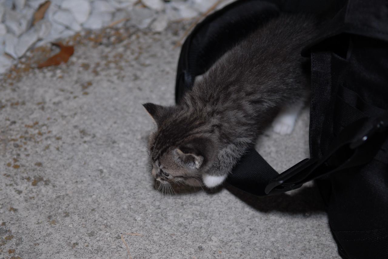 2007 04 12 - New Kitty 002