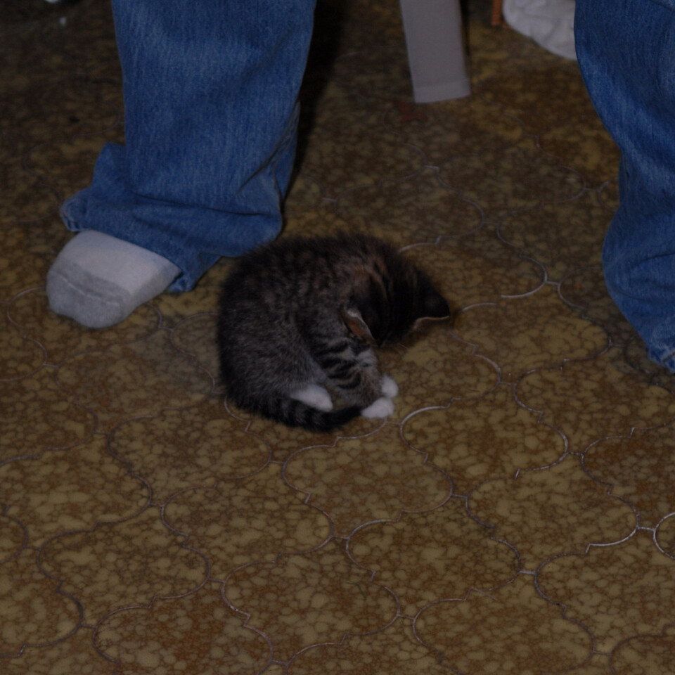 2007 04 12 - New Kitty 021