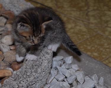 2007 04 12 - New Kitty 023