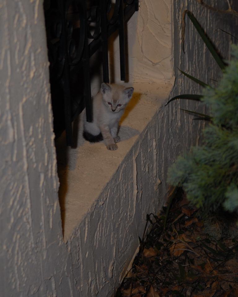 2007 04 12 - New Kitty 038