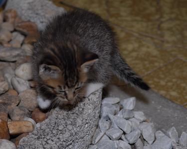 2007 04 12 - New Kitty 022