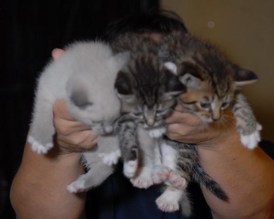 2007 04 12 - New Kitty 015