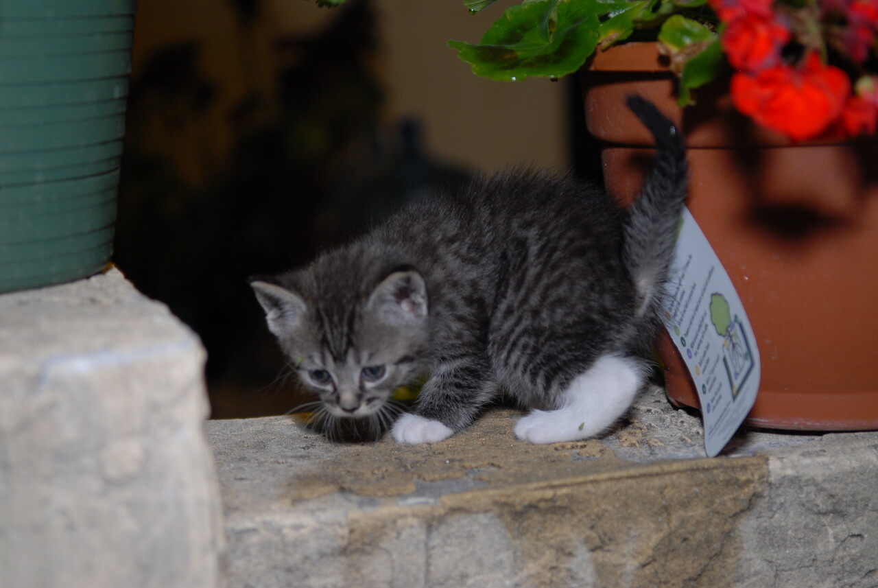 2007 04 12 - New Kitty 029