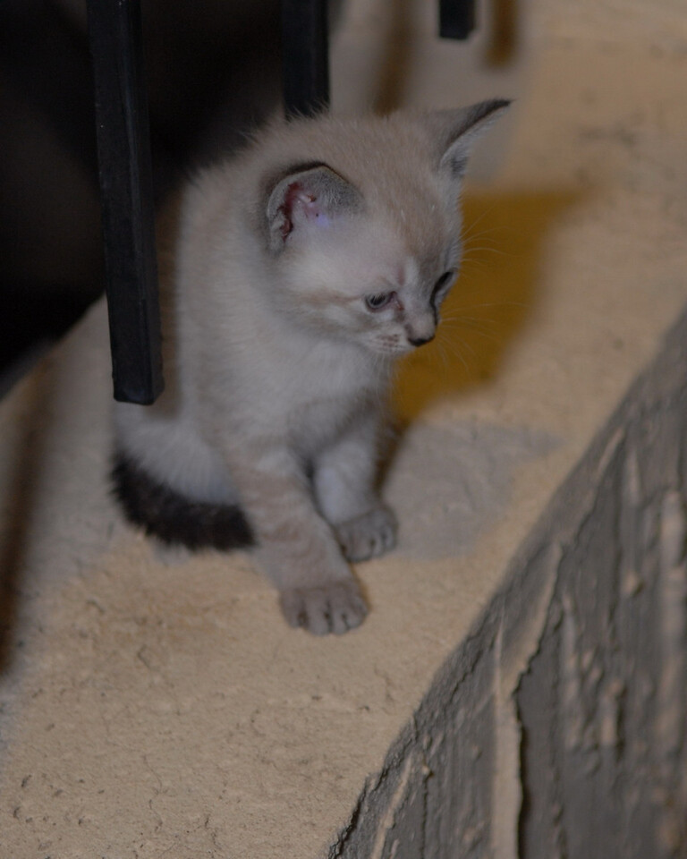 2007 04 12 - New Kitty 039