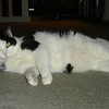 2007 06 22 - Cats 09