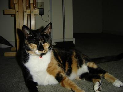 2007 06 22 - Cats 27