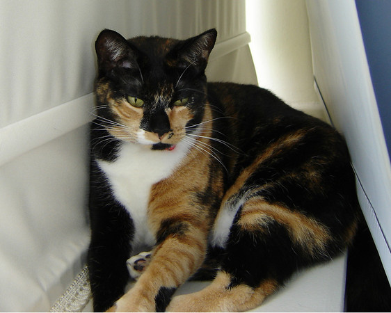 2007 06 22 - Cats 11