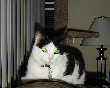 2007 06 22 - Cats 15