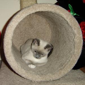 2007 06 22 - Cats 26