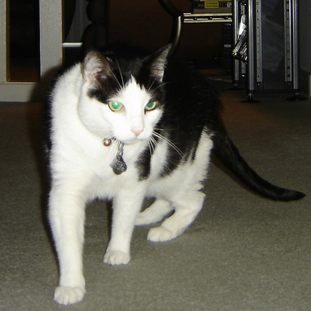 2007 06 22 - Cats 07