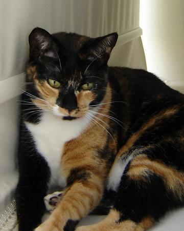 2007 06 22 - Cats 10