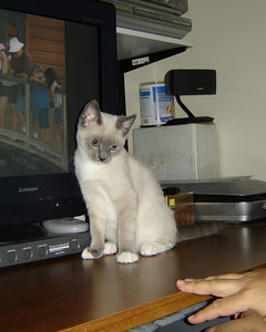 2007 06 22 - Cats 05