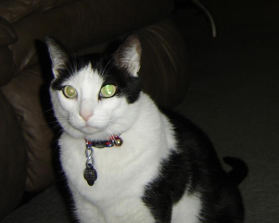 2007 06 28 - Cats 09