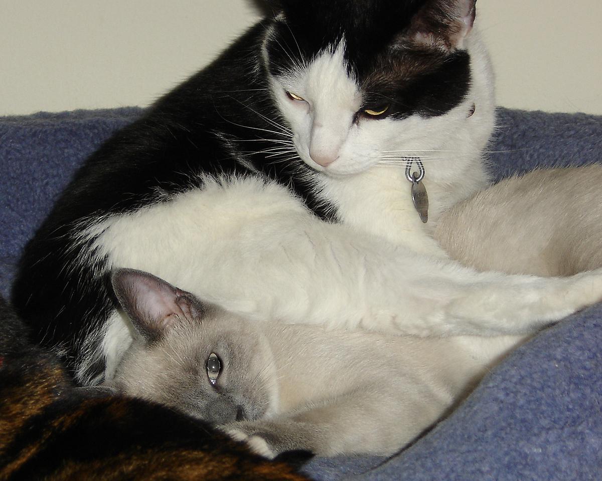 2007 06 28 - Cats 13
