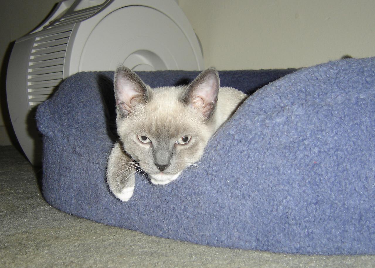 2007 06 28 - Cats 06