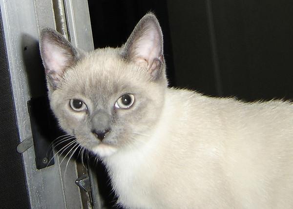2007 06 28 - Cats 07
