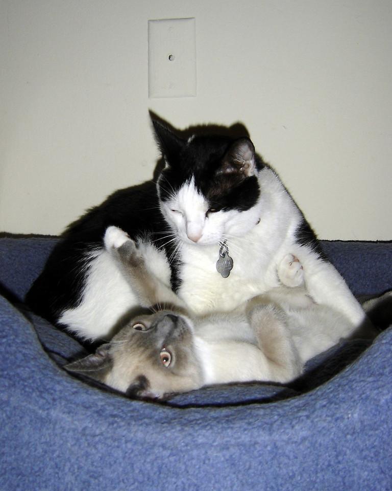 2007 06 28 - Cats 16