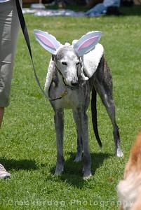 Bunny contest