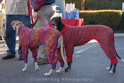 Greyhounds wearing their jammies