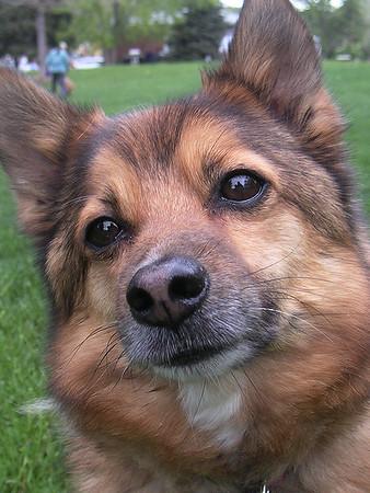 2007-05-Pets