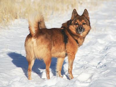 2007-12-Pets