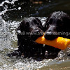 Images from the 4th Annual Flat-Coated Retriever Daze picnic on August 1st 2009. All images will be post-processed prior to printing to maximize image quality. Image Copyright © 2009 J. Andrew Towell for Troutstreaming  outdoor and sports media. All Rights Reserved.