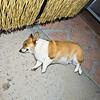 Emma's 7th Birthday Tucson, AZ
